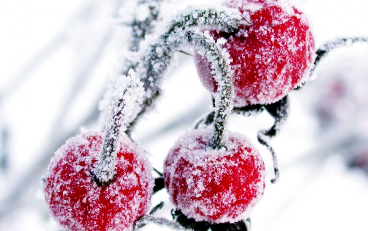 Frosted Cranberry